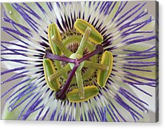 Macro Of Top View Of Passion Flower Acrylic Print by Jaynes Gallery