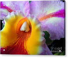 Macro Orchid Acrylic Print by Kristine Merc