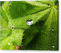 Acrylic Print featuring the photograph Macro Raindrop On Leaf by Karen Horn