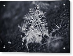Macro Snowflake Acrylic Print