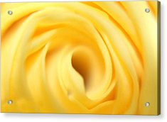 Macro Yellow Rose Acrylic Print