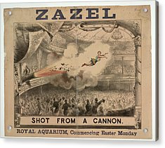 Madame Zazel Shot From A Cannon Acrylic Print by British Library