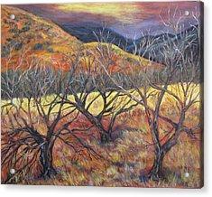 Madera Canyon 2 Acrylic Print by Caroline Owen-Doar
