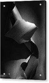 Madrona Bark Black And White Acrylic Print