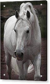 Acrylic Print featuring the photograph Maestoso II Ambrosia D5881 by Wes and Dotty Weber