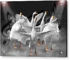 Maestro Acrylic Print