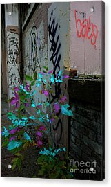 Magenta Cyan And Babs Acrylic Print by Jacqueline Athmann