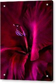 Magenta Gladiola Flower Acrylic Print by Jennie Marie Schell