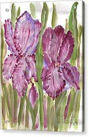 Magenta Iris Acrylic Print by Debbie Wassmann