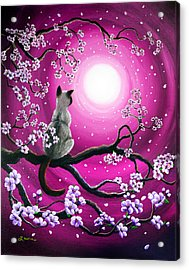 Magenta Morning Sakura Acrylic Print by Laura Iverson