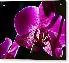 Magenta Orchid Acrylic Print