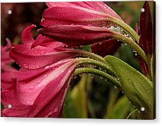 Acrylic Print featuring the photograph Magenta Rain by Greg Allore