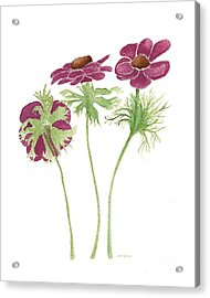 Acrylic Print featuring the painting Magenta Wind Flowers by Nan Wright