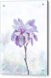 Acrylic Print featuring the photograph Maggie by Elaine Teague