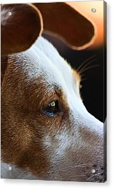 Maggie May Acrylic Print by Mark Alder