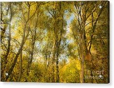 Magic Forest-4 Acrylic Print