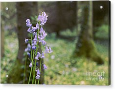 Magic Forest Acrylic Print by Jevgenija Kokoreva