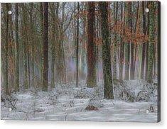 Magic In The Fog 2 Acrylic Print