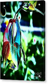 Magic Acrylic Print by Jacqueline McReynolds
