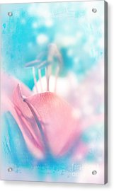 Magic Lily  Acrylic Print
