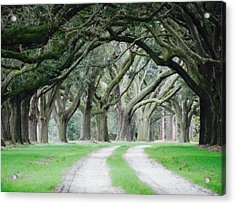 Magic Live Oaks Acrylic Print