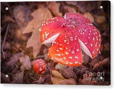 Magic Mushroom Acrylic Print