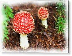 Magic Mushrooms Acrylic Print by Ayse Deniz