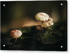Magic Mushrooms Acrylic Print by Scott Norris
