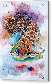 Magic Of Arowana Acrylic Print by Zaira Dzhaubaeva