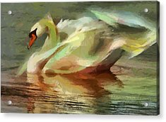 Magic Swan Acrylic Print