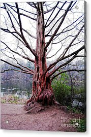 Acrylic Print featuring the photograph Magic Tree by Nina Silver