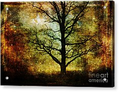 Magic Night Acrylic Print