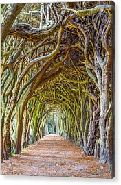 Magic Yew Acrylic Print
