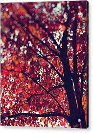 Acrylic Print featuring the photograph Magical Autumn by Kim Fearheiley