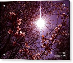 Acrylic Print featuring the photograph Magical Blossoms by Vicki Spindler