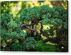 Acrylic Print featuring the photograph Magical Bonsai by Julie Andel