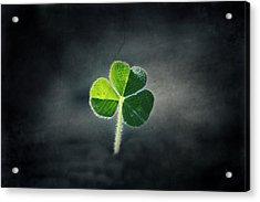 Magical Clover Acrylic Print by Melanie Lankford Photography