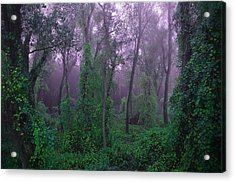 Magical Fairy Forest Acrylic Print