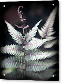 Magical Forest 2 Acrylic Print by Karen Wiles