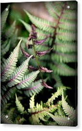 Magical Forest 3 Acrylic Print by Karen Wiles