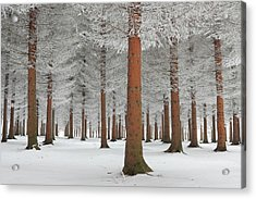 Magical Forest Acrylic Print by Dragisa Petrovic