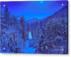 Magical Forest Acrylic Print by Gem S Visionary