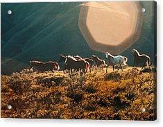 Magical Herd Acrylic Print