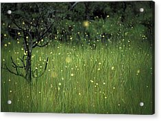 Magical Land Acrylic Print by Lana Enderle