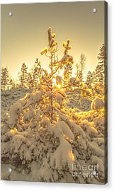 Magical Moments In The Middle Of January Acrylic Print