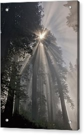 Magical Morning Acrylic Print