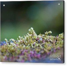 Magical Moss Acrylic Print by Sarah Crites
