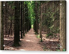 Acrylic Print featuring the photograph Magical Path by Bruce Patrick Smith