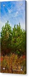 Magical Pines Acrylic Print