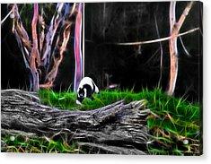 Walk In Magical Land Of The Black And White Ruffed Lemur Acrylic Print